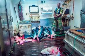 peschereccio spagnolo